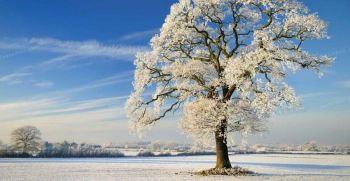 جشن میانه زمستان چیست؟ همه چیز درباره سنت جشن میانه زمستان